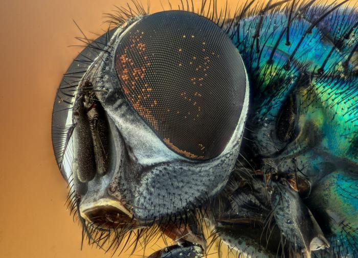 Специалисты ДВФУ воспроизвели антибликовое покрытие глаз насекомых