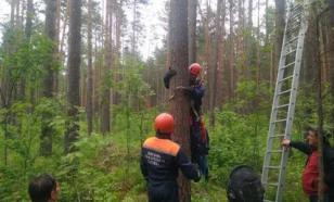 Школьница-парашютистка в Томской области застряла в ветвях дерева