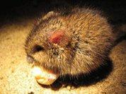 Мышь в упаковке орехов оценили в 200 тыс. рублей