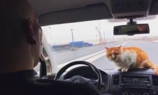 Валуев и кот Мостик открыли движение по Крымскому мосту