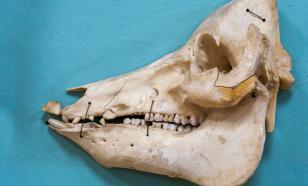 Спасатель из Кировской области нашёл останки древней рептилии