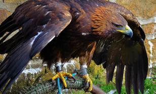 В Кыргызстане возобновлены тренировки ловчих птиц