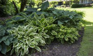 Садовые и комнатные тенелюбивые цветы