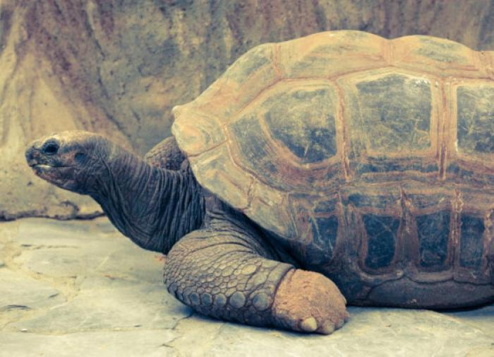 В Ставропольском крае обнаружили окаменелые останки древней черепахи
