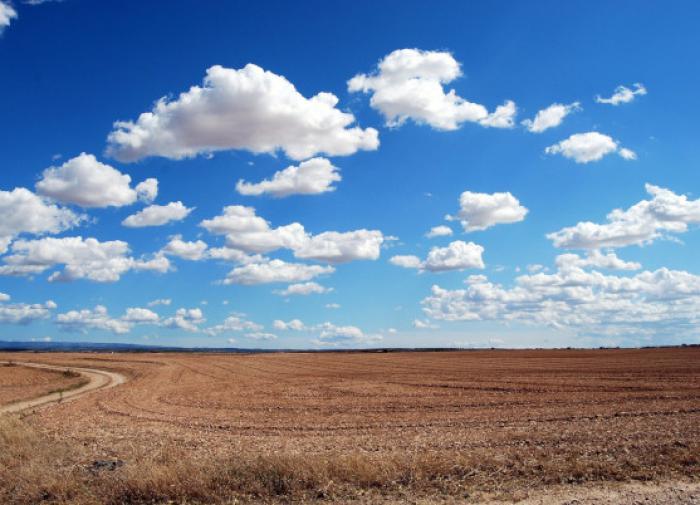 На полях под Астраханью станут выращивать коноплю. Техническую