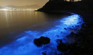 В Поморье можно будет собирать водоросли, выброшенные на берег