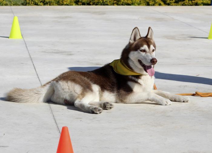 Кинолог попросил россиян не мучить собак ради лайков