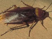 Тараканов призывают в спецназ