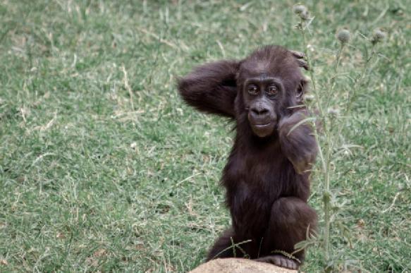 Биологи: млекопитающие тонко чувствуют свет даже в утробе