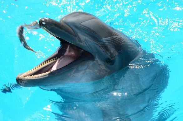 Стоит ли закрывать дельфинарии в России? - комментарий эксперта