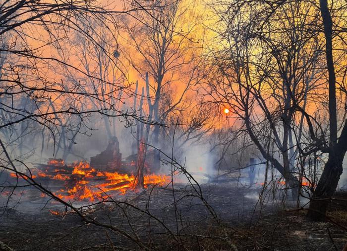 Сибирь горит: дым от лесных пожаров достиг Монголии