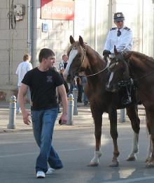 СМИ: полиция назвала голодных и изможденных лошадей бодрыми кобылками