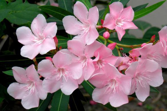 Флорист рассказала, с какими цветами нужно быть осторожнее