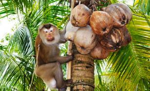 Продавцы кокосовой продукции отказались от труда животных