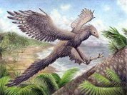 Почему археоптерикс летать разучился?