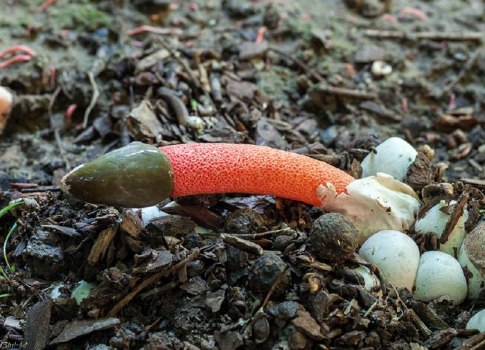 Специалист рассказал о жутких грибах, которые нашли жители Урала