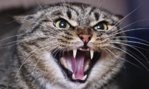 Житель Приморья поплатился жизнью за убийство кошки