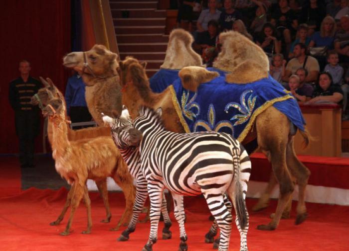 Цирковых животных будут отправлять на пенсию в Крым