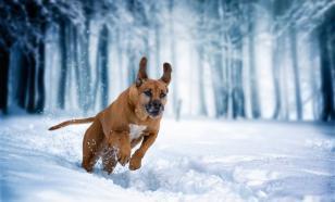 Как ухаживать за собакой в зимний период