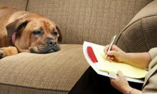 Как организовать жизнь собаки во время самоизоляции