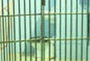 Студентов сдали в тюрьму... для опытов