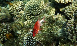 Ихтиологи обнаружили новые виды лучеперых рыб