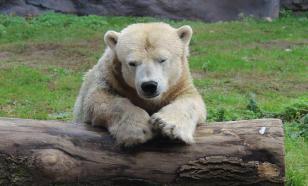 МВД России ко Дню дикой природы подготовило видео о спасении животных