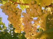 Крымским винам добавят градуса