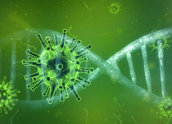 Найдены пять генов, связанных с наиболее тяжёлыми случаями COVID-19