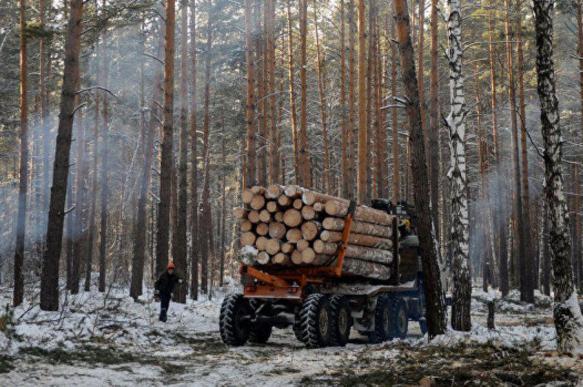 """Теплая зима """"подкосила"""" бизнес лесозаготовителей"""