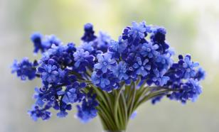 К 8 марта цены на цветы возрастут на 35%