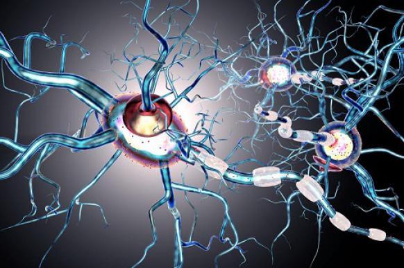 Ученые из Томска внедряют новый метод МРТ мозга