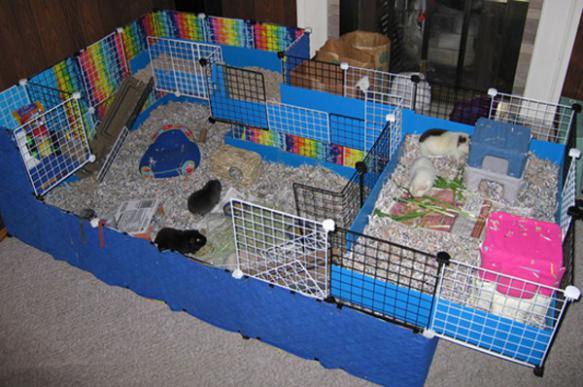 Обустраиваем дом для крысы: как создать зверьку уютное жилище?