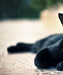 Не обижайте кошек! Берегите карму