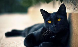 Как хозяин может обидеть кошку