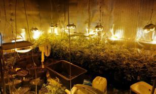 Полицейские нашли наркоплантацию в Тверской области