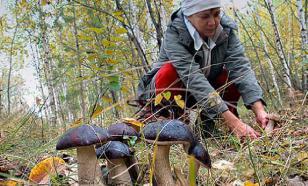 В Подмосковье спасатели спасли потерявшуюся в лесу многодетную семью