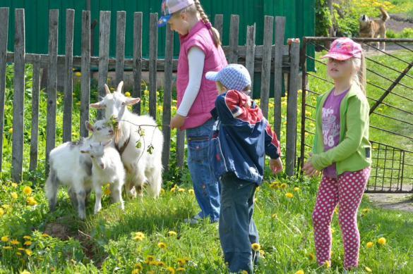 В России будут развивать агротуризм