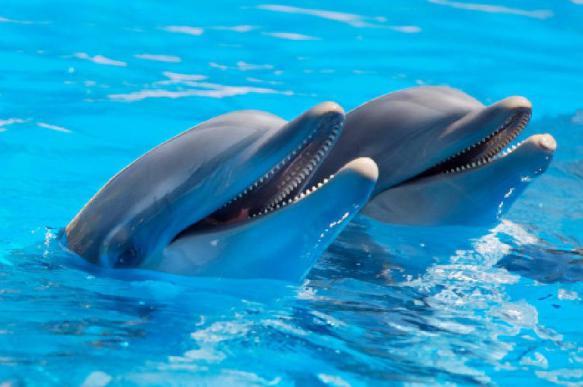 """Исследование: 99% дельфинов - """"правши"""""""