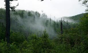 Виртуальный лес наглядно демонстрирует последствия потепления