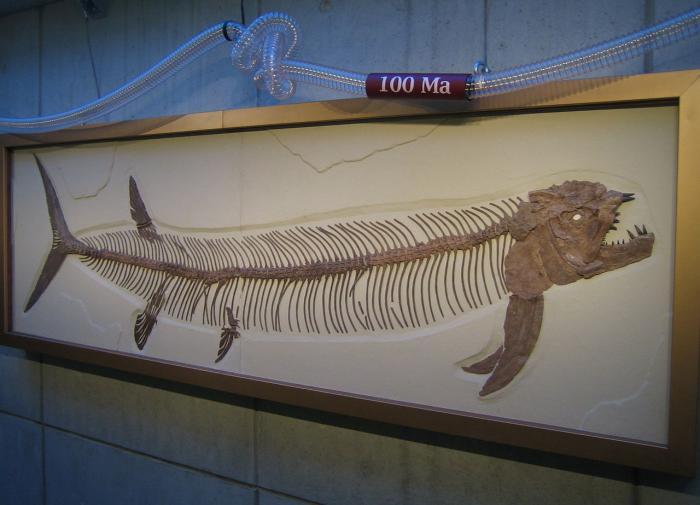 В Аргентине найдены останки рыбы возрастом 70 млн лет