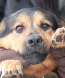 """""""Заберите меня домой!"""" - собаки Сызрани ждут своих новых хозяев"""