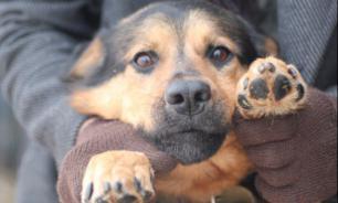 Бездомные собаки Сызрани ждут новых хозяев