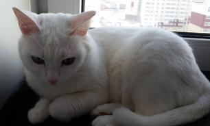 Кот набедокурил в съемной квартире на 77 тысяч рублей