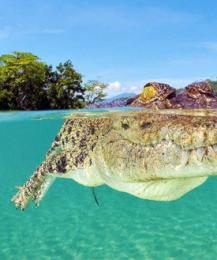Трехметровый крокодил обнаружен на пляже в Таиланде