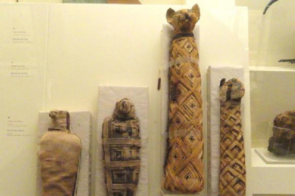 Зачем древние египтяне мумифицировали животных?