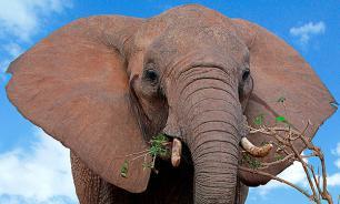 Из цирка в Кемерове сбежали слоны