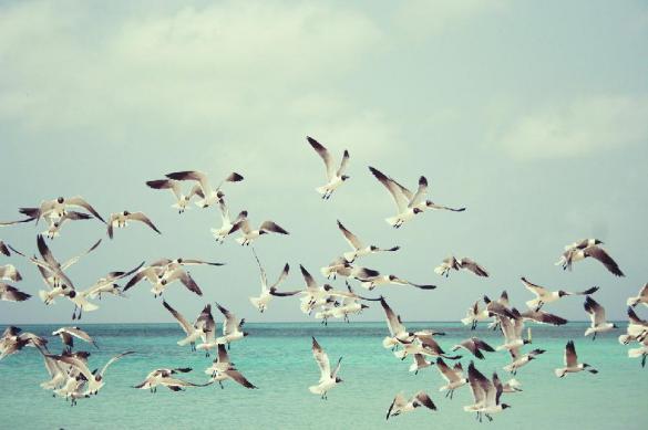 У морских птиц появилась новая стратегия поиска пищи