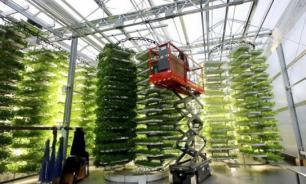 Ферму вертикального выращивания овощей откроют на юге  Москвы