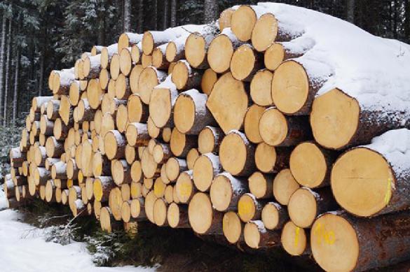 В Приморье в суд направлено дело о контрабанде леса на 450 млн рублей